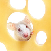 mouse-cheese